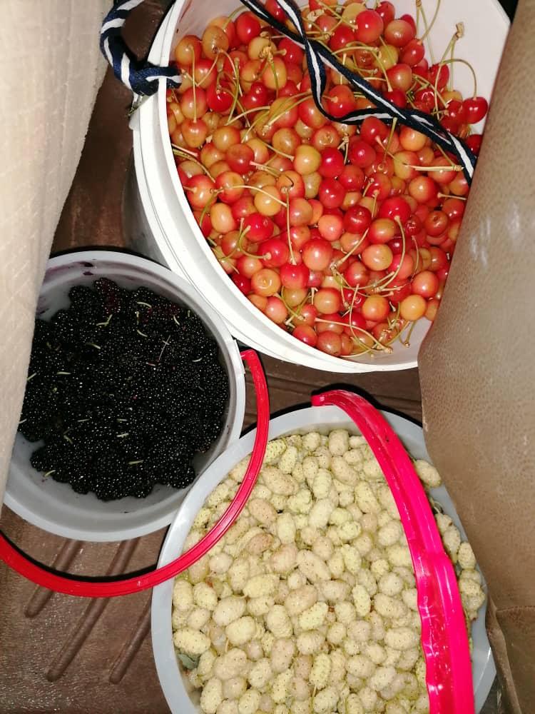 توت و شاه توت و گیلاس جلفا، سوغاتی های روستا
