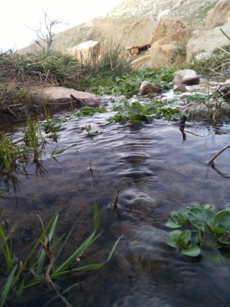 چشمه روستای داران